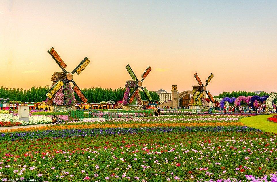dubai miracle garden - Dubai Miracle Garden